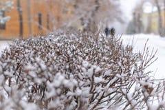Taggiga filialer av klippte buskar täckas med snö arkivfoton