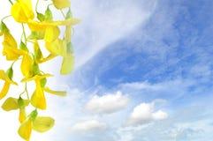 Taggiga sesban blommor Arkivbild