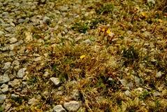 Taggigt gräs på vägen Arkivbilder