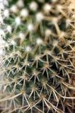 Taggtexurenärbild av en kaktusmakro Arkivbilder