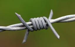 taggtråd Arkivfoto