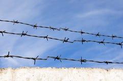 taggtråd Arkivfoton