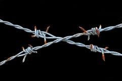 taggtråd fotografering för bildbyråer