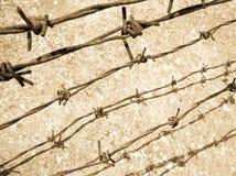 taggtråd Royaltyfri Fotografi