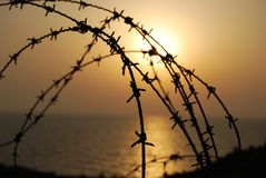 taggtråd Royaltyfria Foton