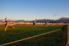 Taggtråden markerar gräns av jordbruksmark, Nya Zeeland royaltyfri foto