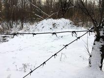 Taggtrådstaketet är mot av bakgrund av vinterskogen royaltyfria bilder