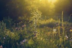 Taggväxt i solljus royaltyfria bilder