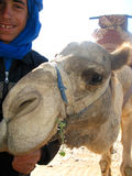 taghazout водителя верблюда maroccan Стоковая Фотография RF