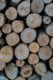 Tagli di legno Fotografia Stock