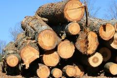 Tagli di recente gli alberi Fotografia Stock