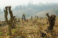 Tagli e bruci la coltivazione, foresta pluviale tagliata e bruciata per piantare Immagine Stock