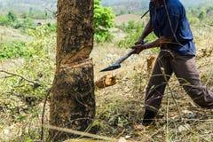 Tagli e bruci la coltivazione, foresta pluviale tagliata e bruciata per piantare fotografia stock libera da diritti