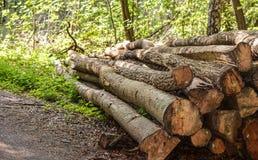 Tagli e l'albero contrassegnato registra Immagine Stock