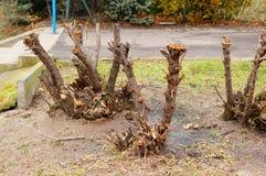 Tagli gli alberi Immagine Stock