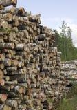 Tagli gli alberi nella priorità bassa della natura Fotografia Stock Libera da Diritti