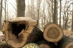 Tagli gli alberi nella sosta Fotografia Stock Libera da Diritti