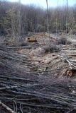 Tagli gli alberi in una foresta Immagine Stock