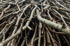 Tagli i rami di albero Immagine Stock Libera da Diritti