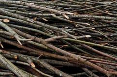 Tagli i rami di albero Immagini Stock Libere da Diritti