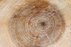 Tagli i rami di un albero con gli anelli Immagine Stock Libera da Diritti