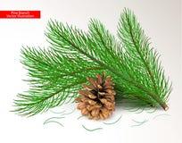 Tagli i rami verdi freschi del pino ed il cono marrone asciutto isolati su fondo bianco Oggetti e spazzola dell'ago di arte per p fotografia stock