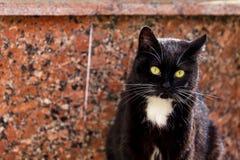 Tagli il bello gatto in bianco e nero che esamina la macchina fotografica sulla S fotografie stock