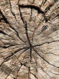 Tagli il ceppo di legno di albero o del tronco immagini stock