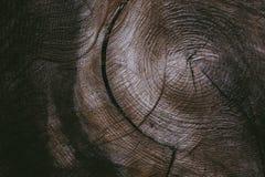 Tagli il fondo del tronco di albero e strutturi Struttura di legno del tronco di albero tagliato Vista del primo piano di vecchia Fotografia Stock
