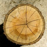 Tagli il granulo di legno del libro macchina Fotografia Stock