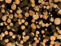 Tagli il legname del pino Immagine Stock Libera da Diritti