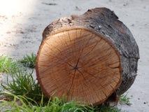 Tagli il legno del ceppo Fotografie Stock Libere da Diritti
