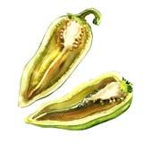 Tagli il mezzo peperone verde fresco crudo, il capsico isolato, illustrazione dell'acquerello illustrazione di stock
