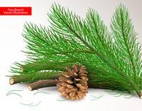 Tagli il pino ed il cono asciutto isolati su fondo bianco Oggetti e spazzola di arte per progettazione Illustrazione realistica d immagini stock