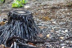 Tagli il tronco di albero Immagine Stock