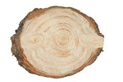 Tagli l'albero Fotografie Stock Libere da Diritti