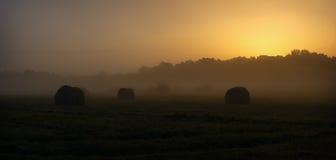 Tagli l'erba in prato nella foschia prima dell'alba Immagini Stock