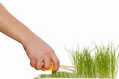Tagli l'erba verde fotografie stock libere da diritti