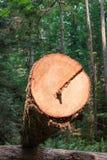 Tagli l'estremità della foresta di connessione Immagine Stock