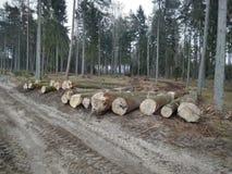 Tagli la foresta fotografia stock libera da diritti