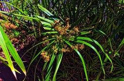 Tagli la pianta con i fiori marrone chiaro morti su  fotografia stock libera da diritti