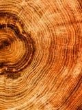 Tagli la quercia dell'albero fotografia stock