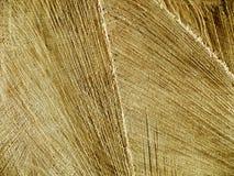 Tagli la struttura di legno Immagine Stock