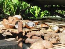 Tagli le noci di cocco sulla piattaforma nel fondo tropicale naturale immagine stock