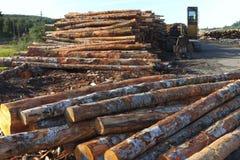 Tagli legna pronto per l'esportazione, la baia Oregon dei Coos. Fotografia Stock