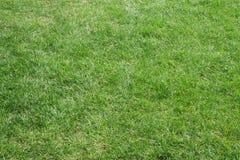 Tagli in modo bello l'erba del campo Fotografia Stock Libera da Diritti