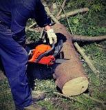 Taglialegna con abiti da lavoro protettivi che tagliano un grande tronco con la t Fotografia Stock Libera da Diritti