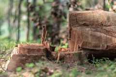 Tagliando gli alberi nella conduzione selvaggia a ridurre il livello dell'ossigeno ed agricoltura ambientale di ecologia fotografia stock