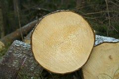 Tagliato giù gli alberi Immagini Stock