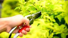 Tagliatori di uso del lavoratore sull'albero fresco